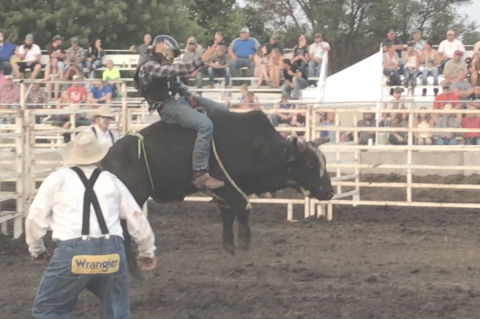 Hartington-Newcastle's Ethan Koch climbed aboard this bull at the Dixon County Fair to try bull riding for the first time. Photo courtesy of Morgan Koch